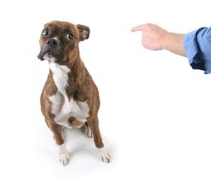 Dog-Sitting-Trick